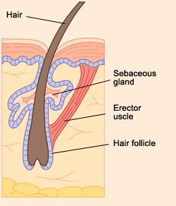 Hair Loss Package_2